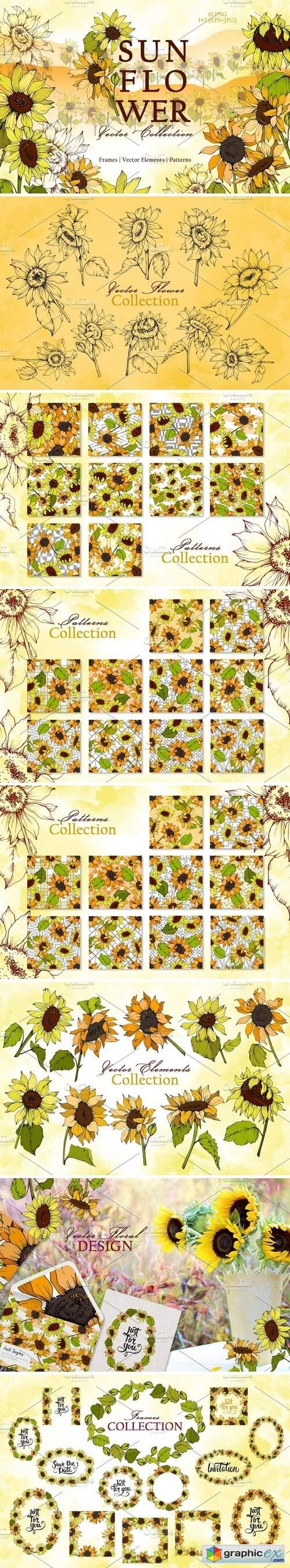 Sunflower Vector Collection
