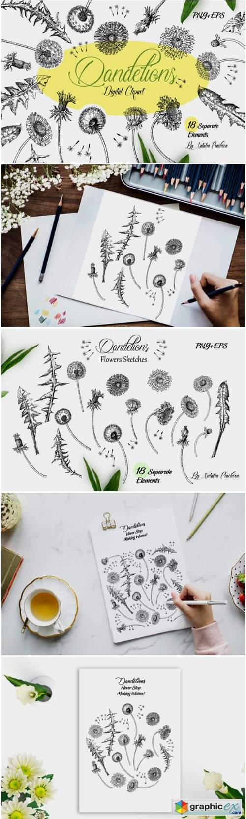 Dandelions Sketches Clipart