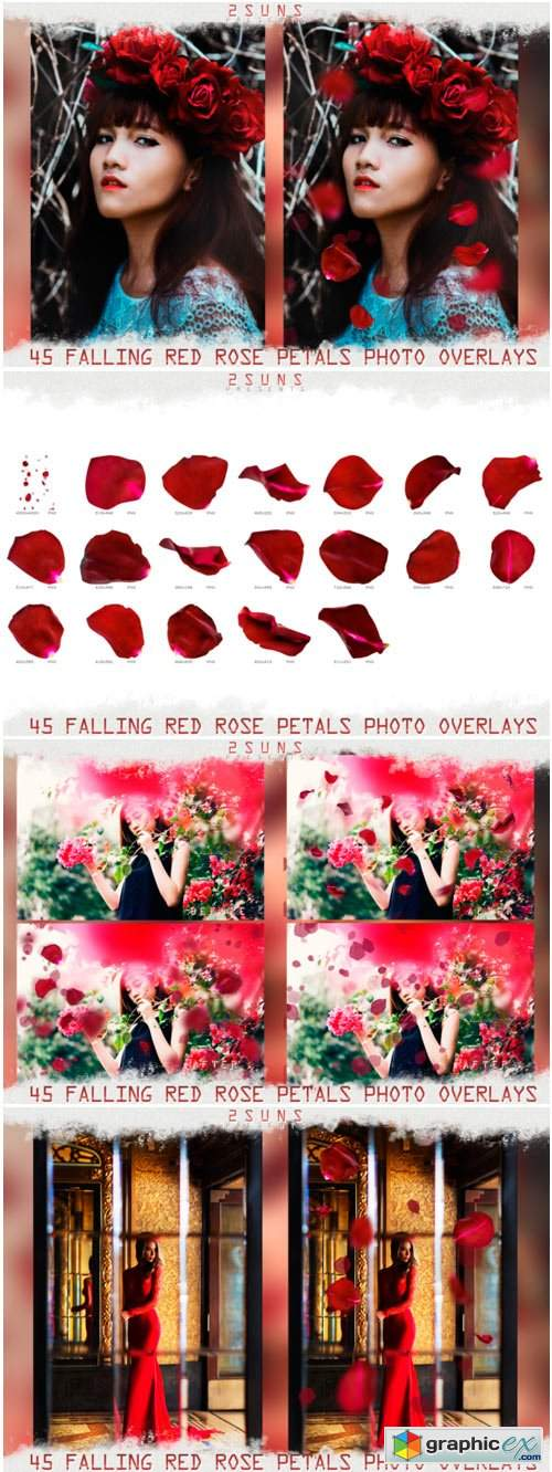 Falling Rose Petals Photo Overlays 1669599