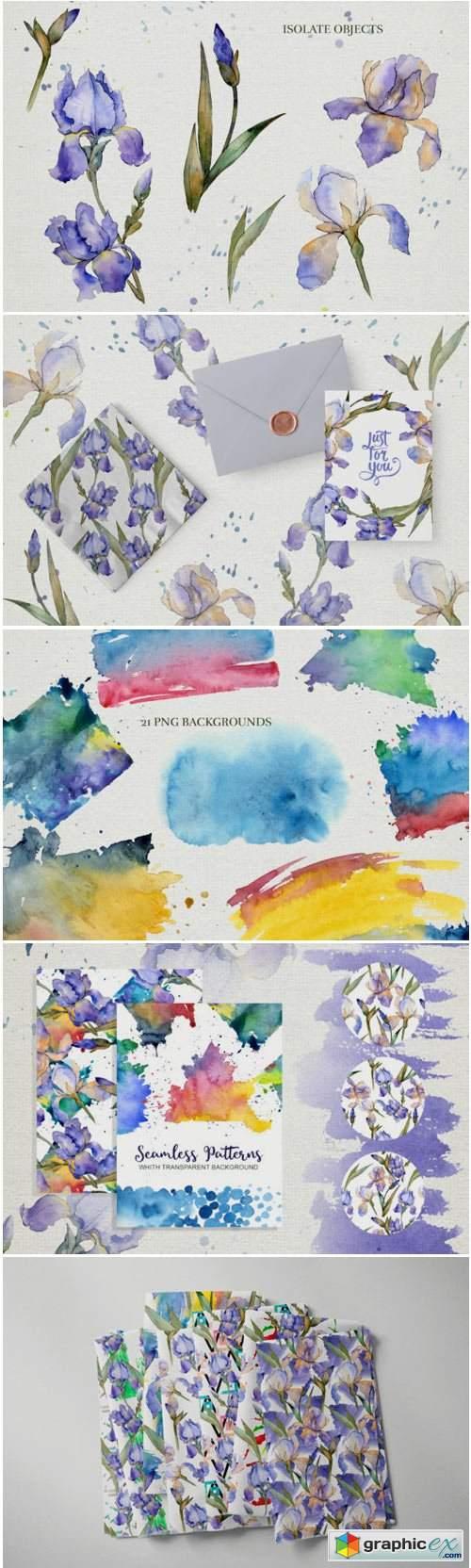 Blue Irises Flowers Morning Dawn