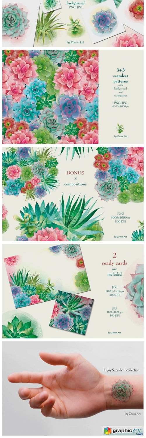 Succulents Illustrations and Patterns