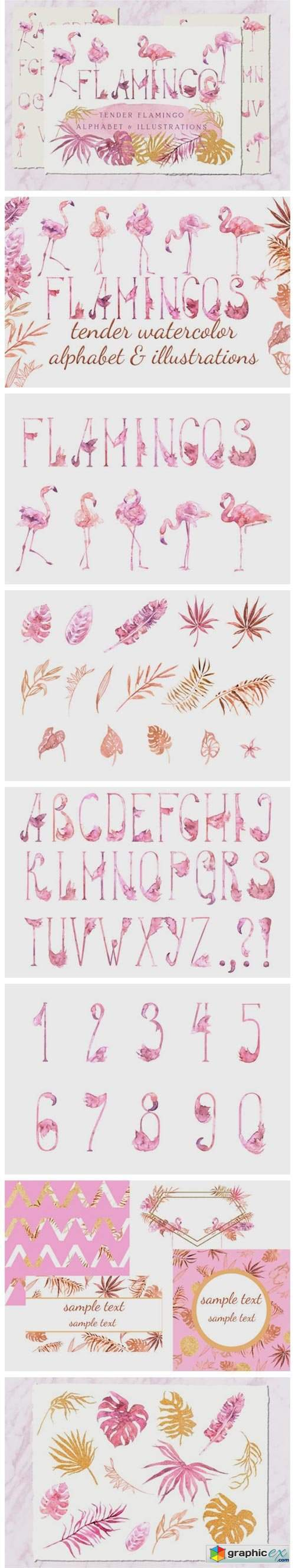 Tender Flamingo Alphabet