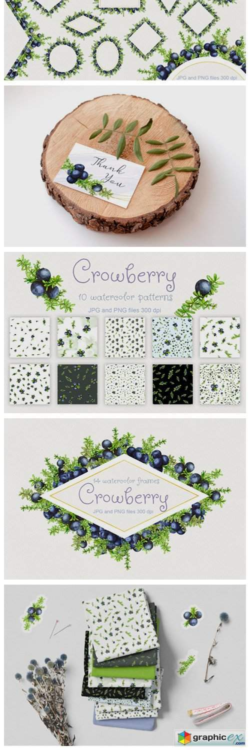 Crowberry. Watercolor Set Illustrations