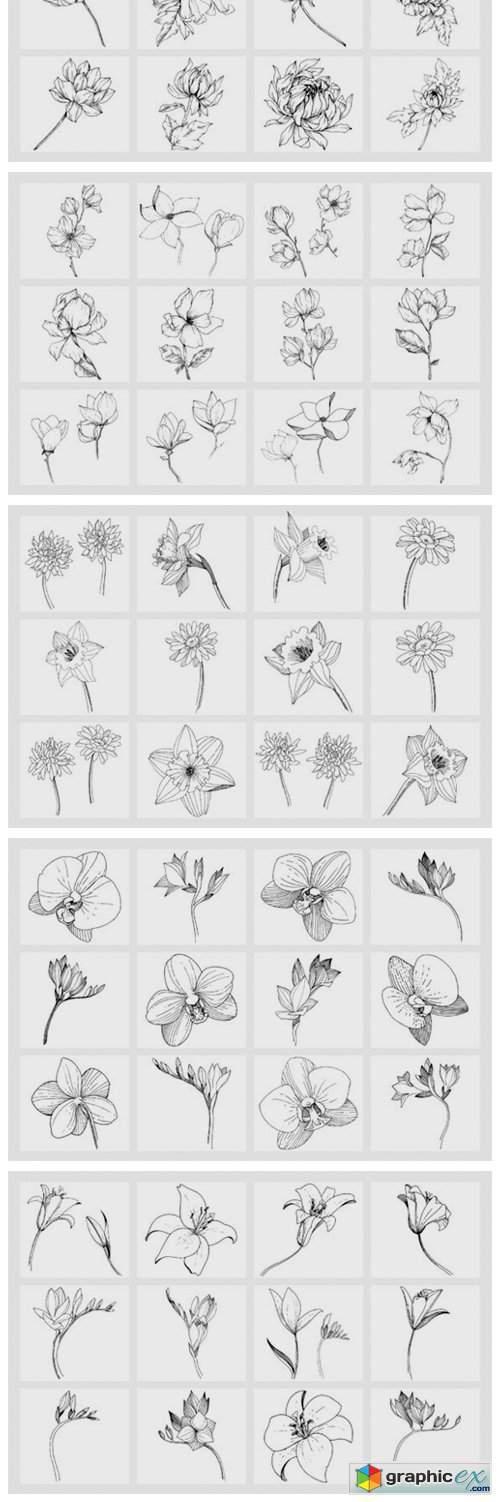 Vector Illustration of Freesia Flower