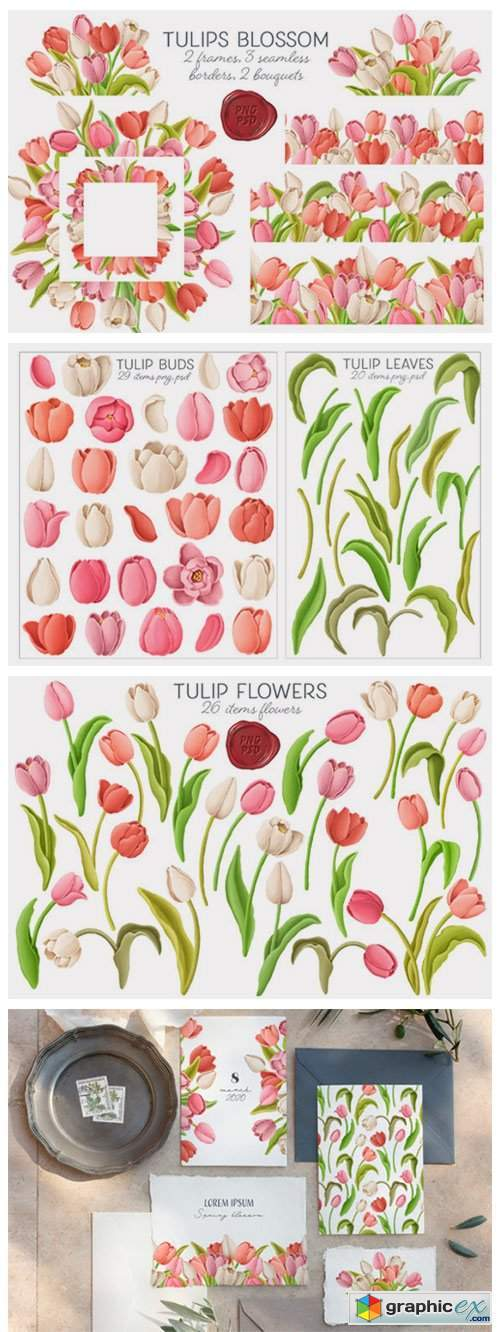 Tulip Flowers Patterns Borders