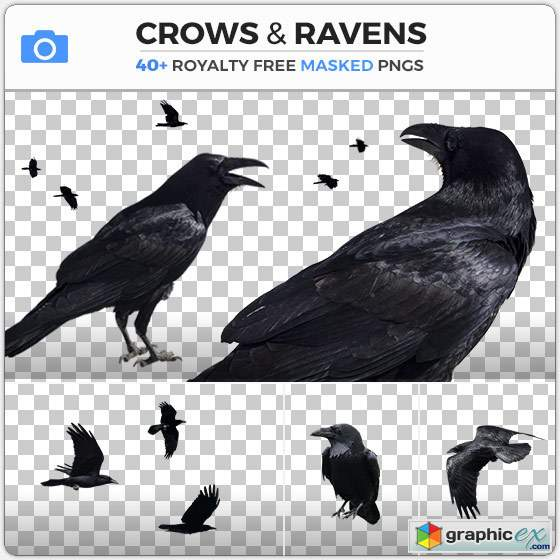 PhotoBash - CROWS & RAVENS