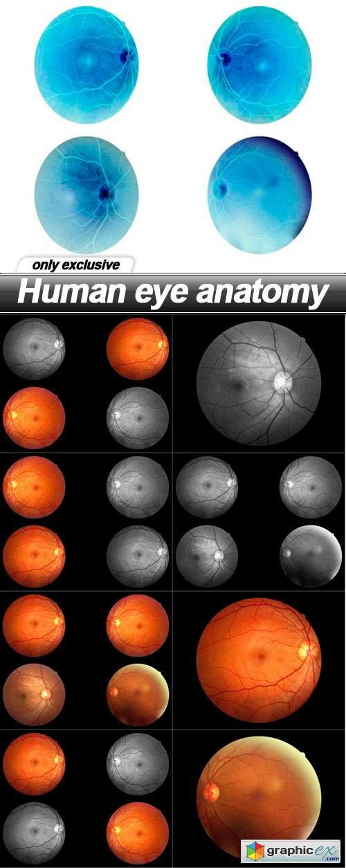 Human eye anatomy - 9 UHQ JPEG