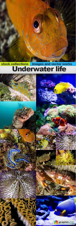 Underwater life, 15 x UHQ JPEG
