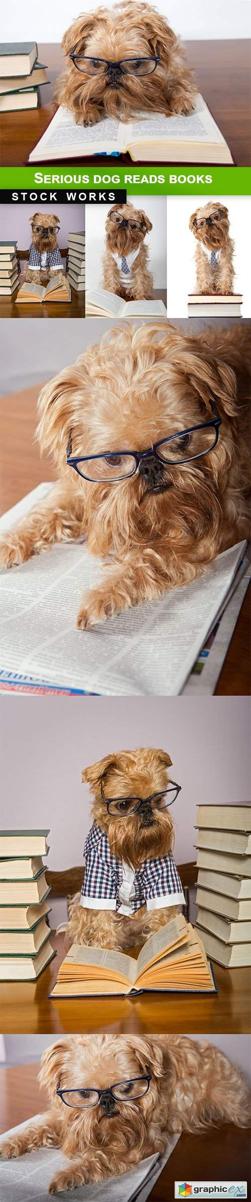 Serious dog reads books - 7 UHQ JPEG