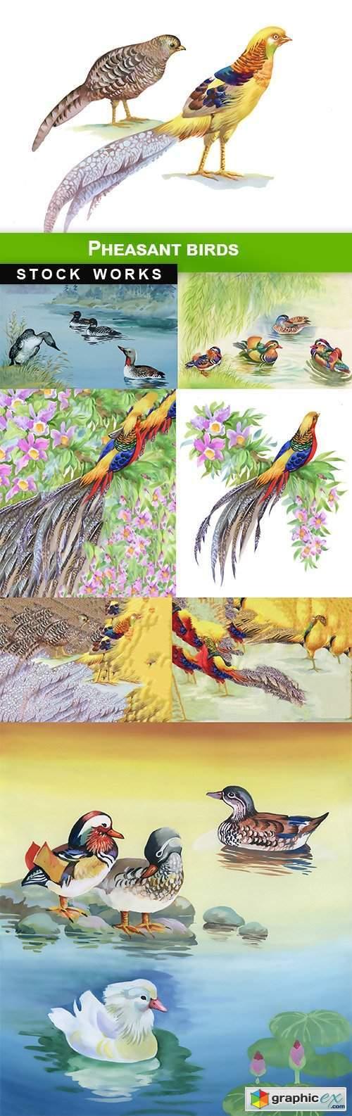 Pheasant birds - 8 UHQ JPEG