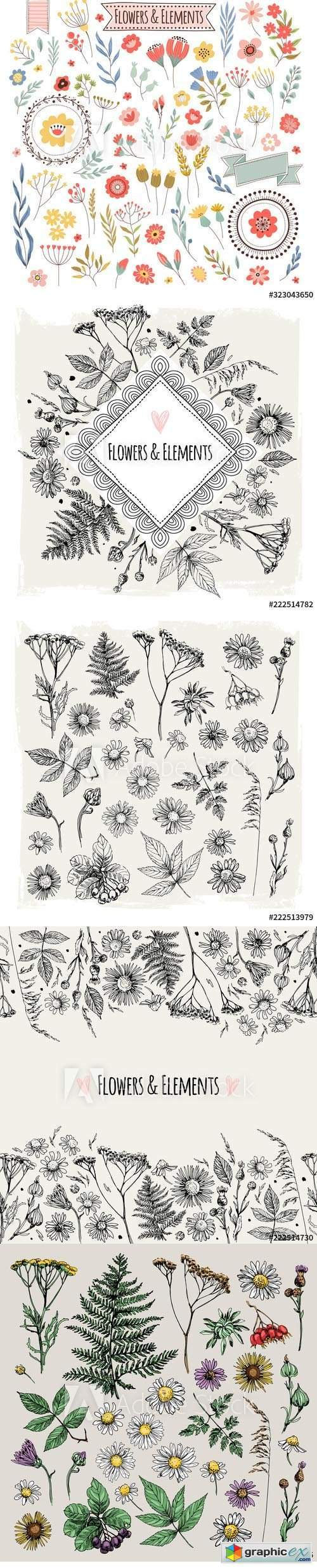 Set of illustrations of plants and flowers