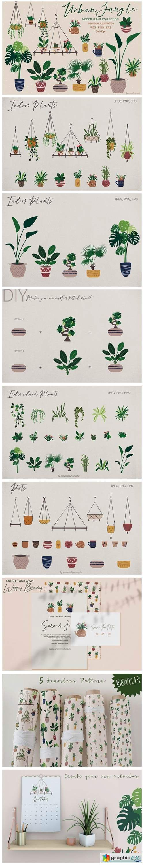 Hand Drawn Botanical Plant Illustration