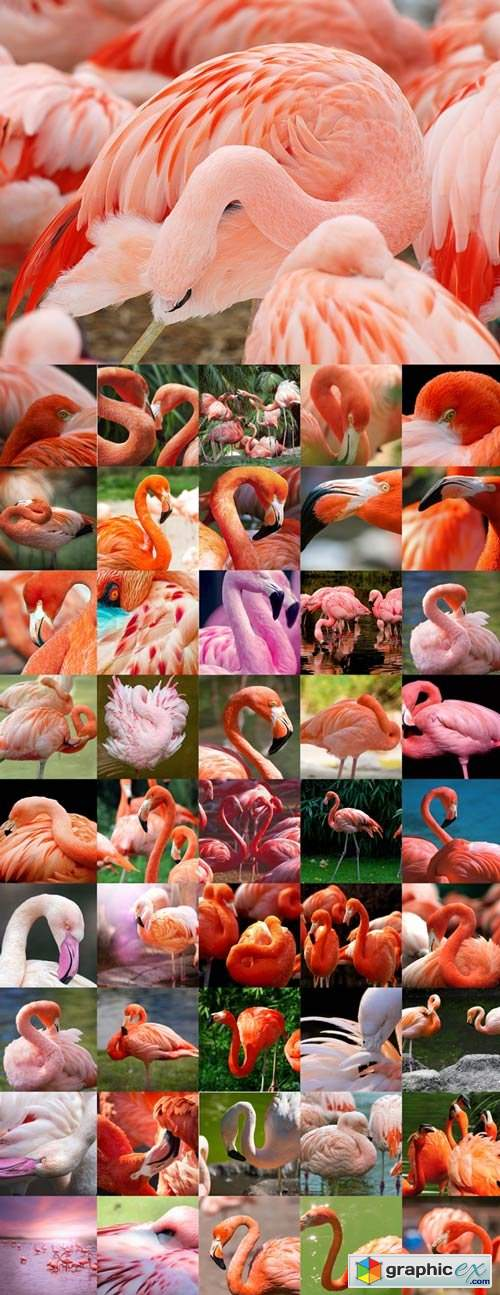 Amazing flamingos Raster Graphics