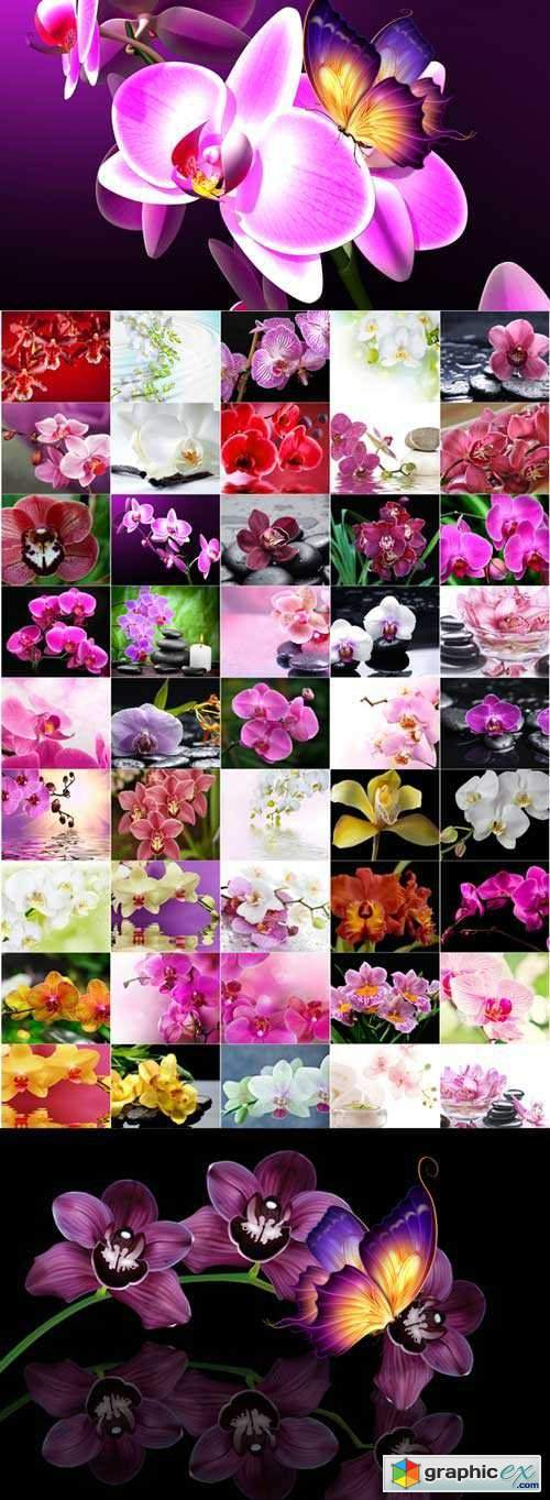 The charm of orchids