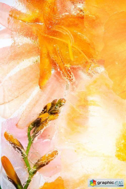 Orange natural branch of forsythia flowers background
