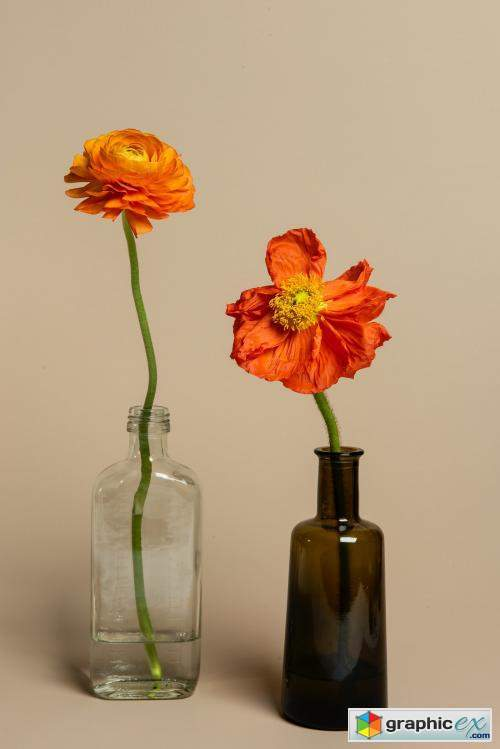 Blooming orange ranunculus flowers in a bottle vase