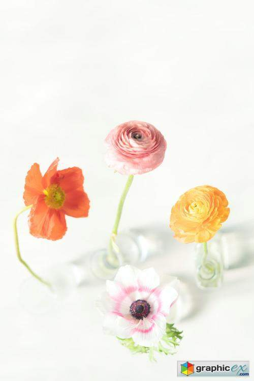 Blooming colorful flowers in vases