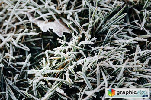 Grass covered in frost textured background