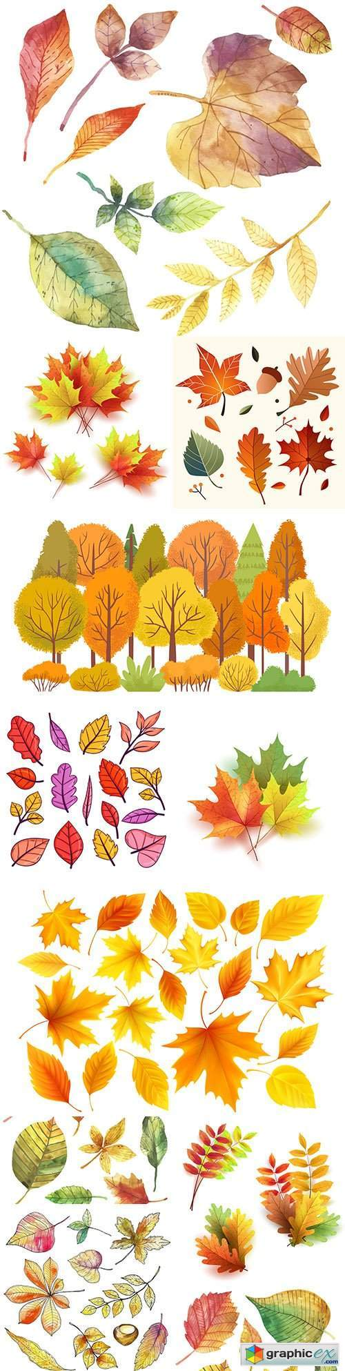 Autumn bright colorful different leaves illustration collection