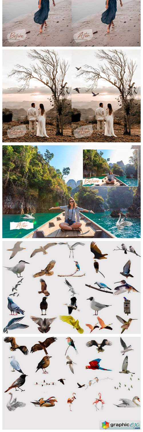 45 Realistic Bird Overlays