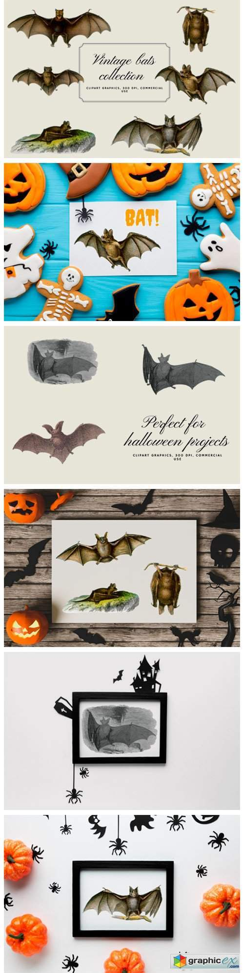 Vintage Bats Collection, Creepy Graphics
