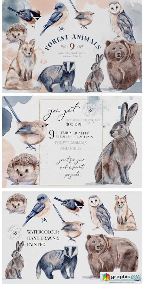 Watercolor Forest Animals Birds Owl