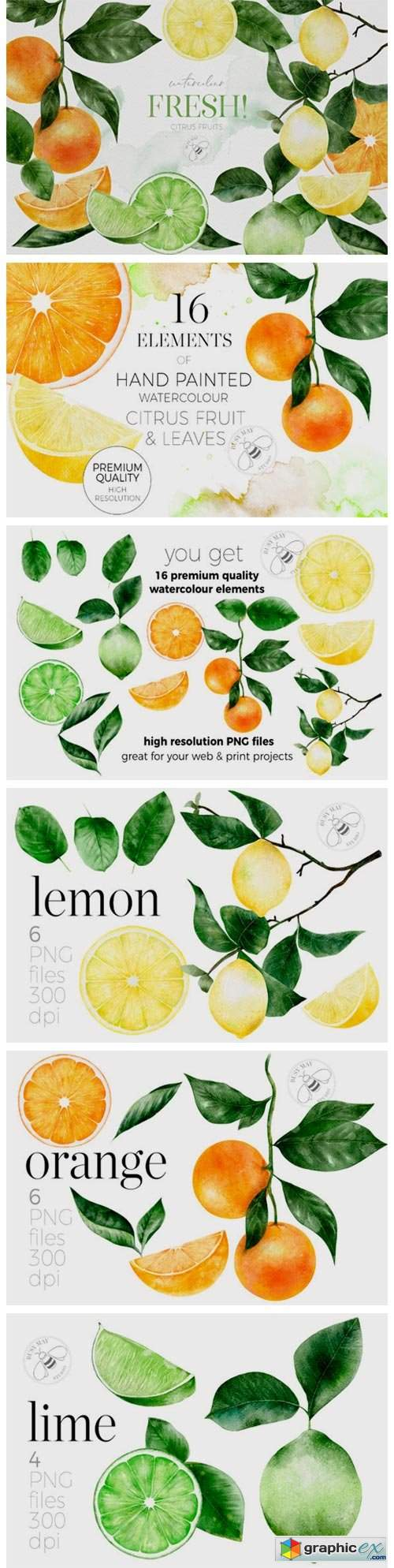 Fruit Watercolour Citrus Fruit Lemons