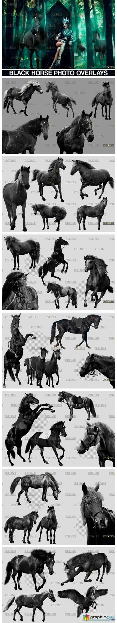 Photoshop Overlay Black Horse  8559805