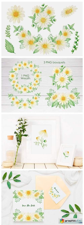 Watercolor Daisy Clipart