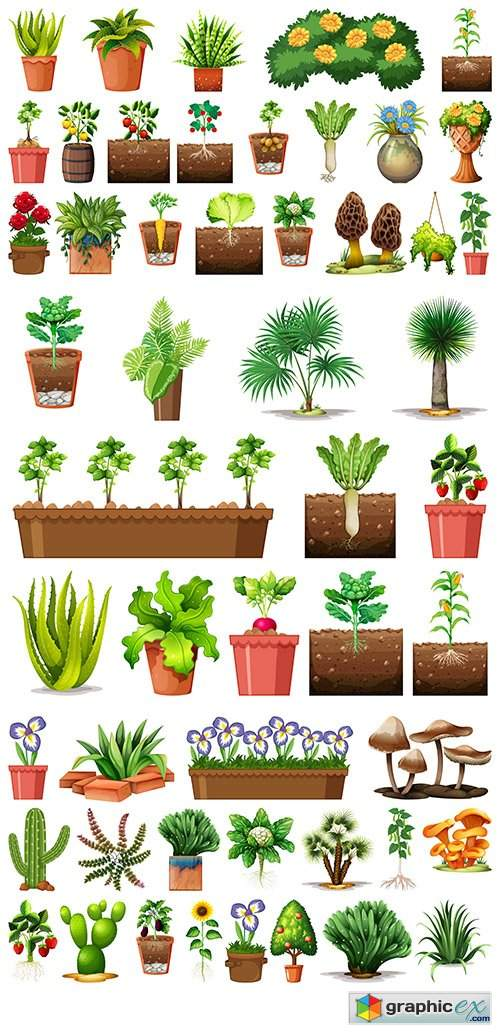 Set of different plants pots isolated