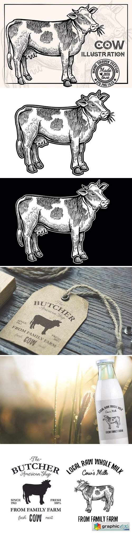 Cow Vintage Illustration 1910176