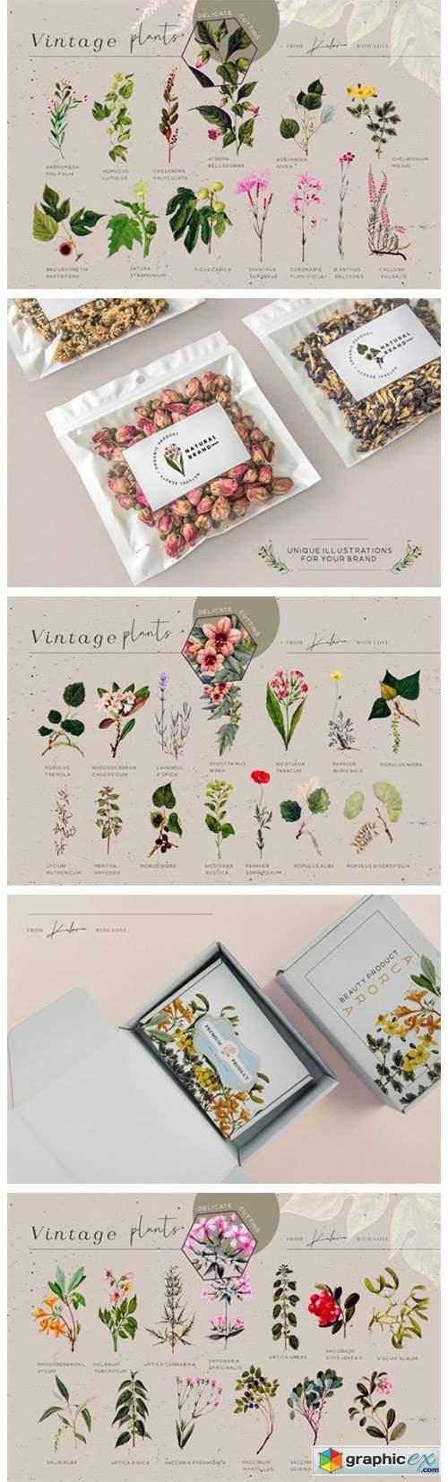Green Garden - Vintage Botanical Kit